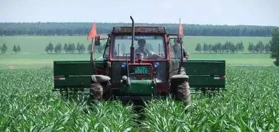 [玉米]玉米播种时间、生长周期、施肥标准,史上最全!
