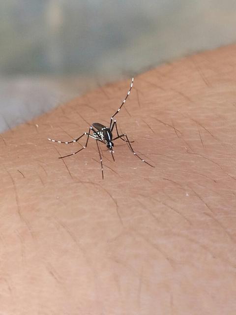蚊子能飞多高,买房买多少楼以上就没有蚊子了?