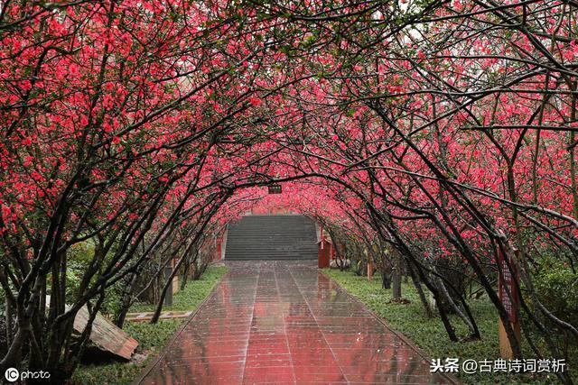 苏轼初到黄州偶遇海棠花事,一首咏物诗写出了花人合一的最高境界